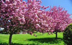 spring-blooming-trees