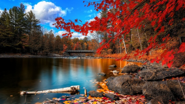 red_autumn_leaves_water-1600x900